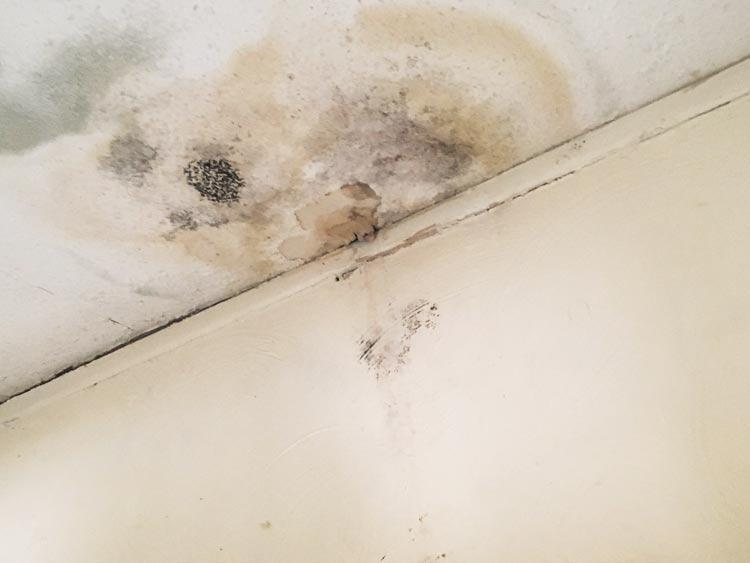Mold At Its Worst Image 5