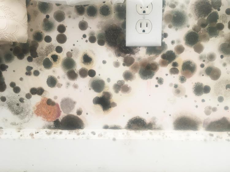 Mold At Its Worst Image 27