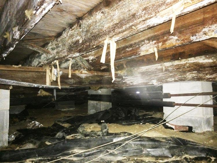 Crawl Space Disasters Image 2