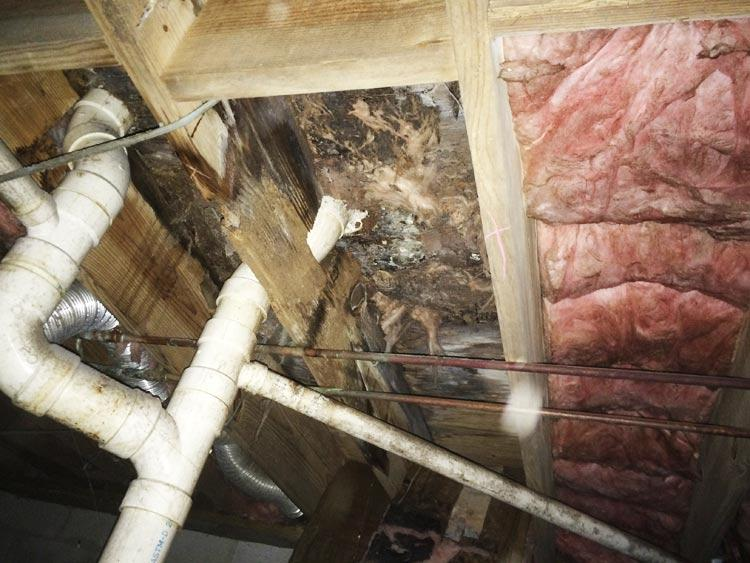 Crawl Space Disasters Image 18