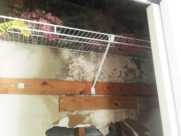 Mold At Its Worst Image 13