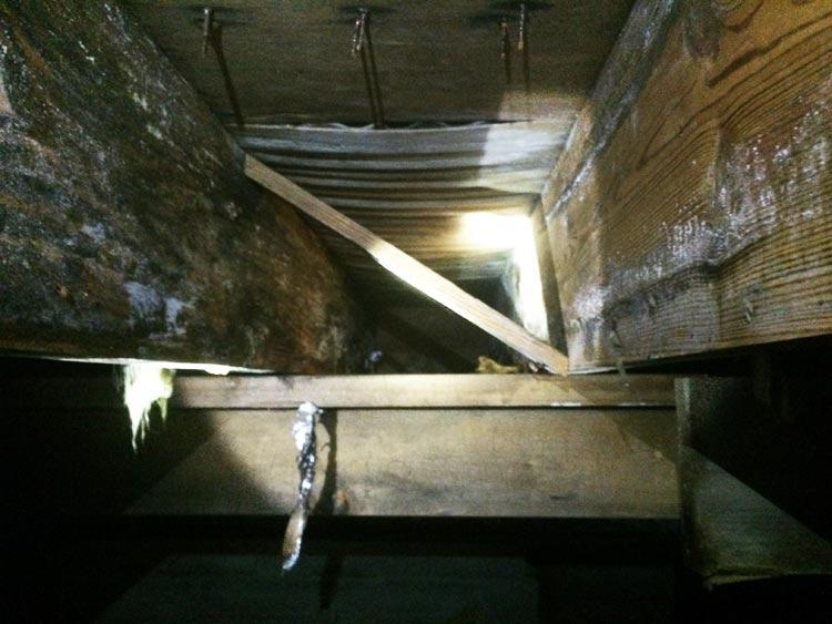 Crawl Space Disasters Image 13