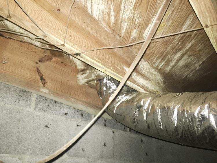 Crawl Space Disasters Image 21