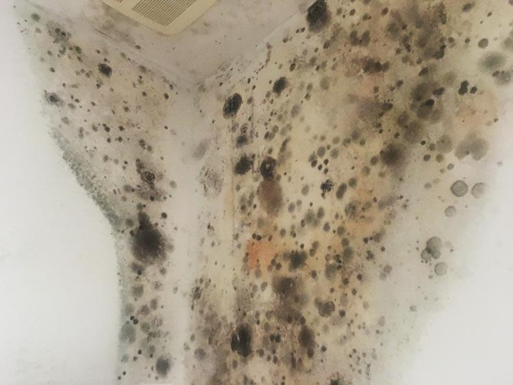 Mold At Its Worst Image 9