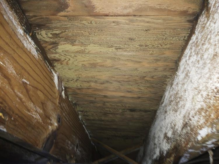 Crawl Space Disasters Image 12