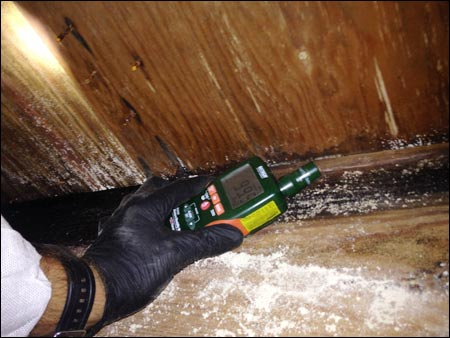 Crawlspace mold analysis
