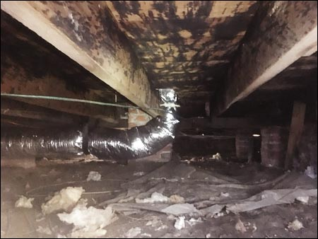 Crawl Space Remediation mold growth