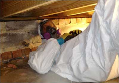 Inspection of Mold Damage in Virginia Beach